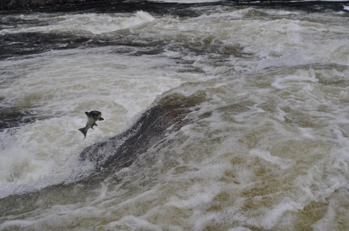 Харловка водопад середина июля