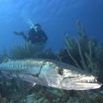 рыбалка на Кубе, рыболовные туры на Кубу.