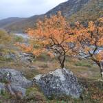 программа три реки Харловка-Рында-Восточная Лица.