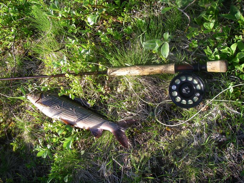 река Белоусиха рыбалка на реке Белоусиха