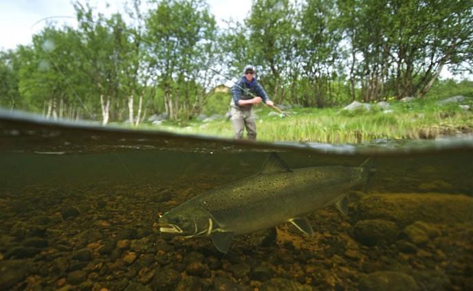 харловка рыбалка сколько стоит