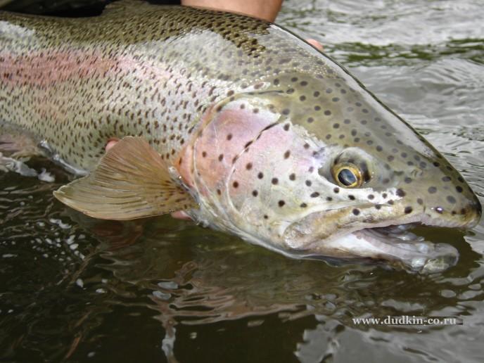 рыбалка и рыболовные туры на Камчатка река Жупанова