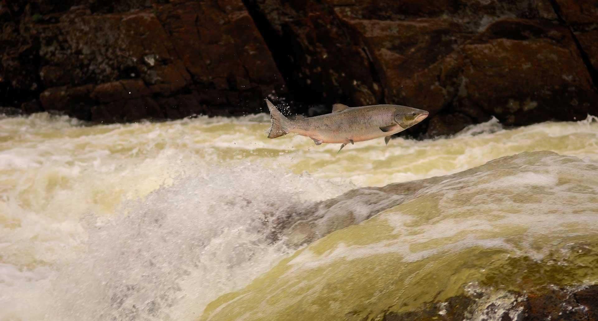 Рыбалка на Кольском полуострове. Рыбалка на реке Харловка