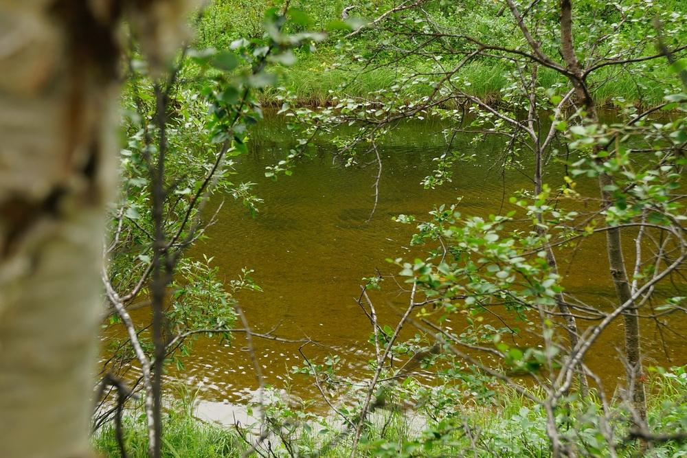 прозрачная вода и семга в реке Белоусиха