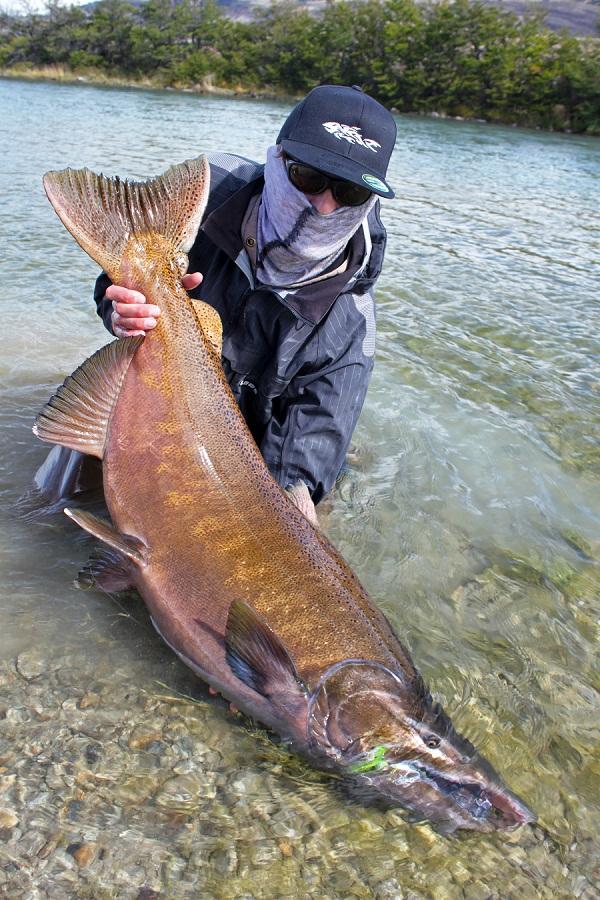 рыбалка в Аргентине. Ловля лосося и форели в Аргентине. чавыча 138 см.