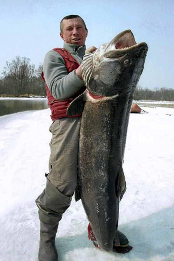 запрет на ловлю тайменя в кемеровской области