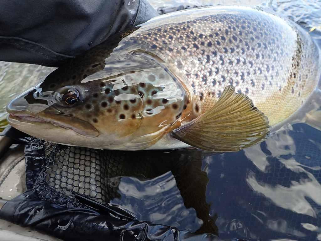 Рыбалка и рыболовные туры Кольский полуостров ловля кумжи нахлыстом река Харловка и Рында