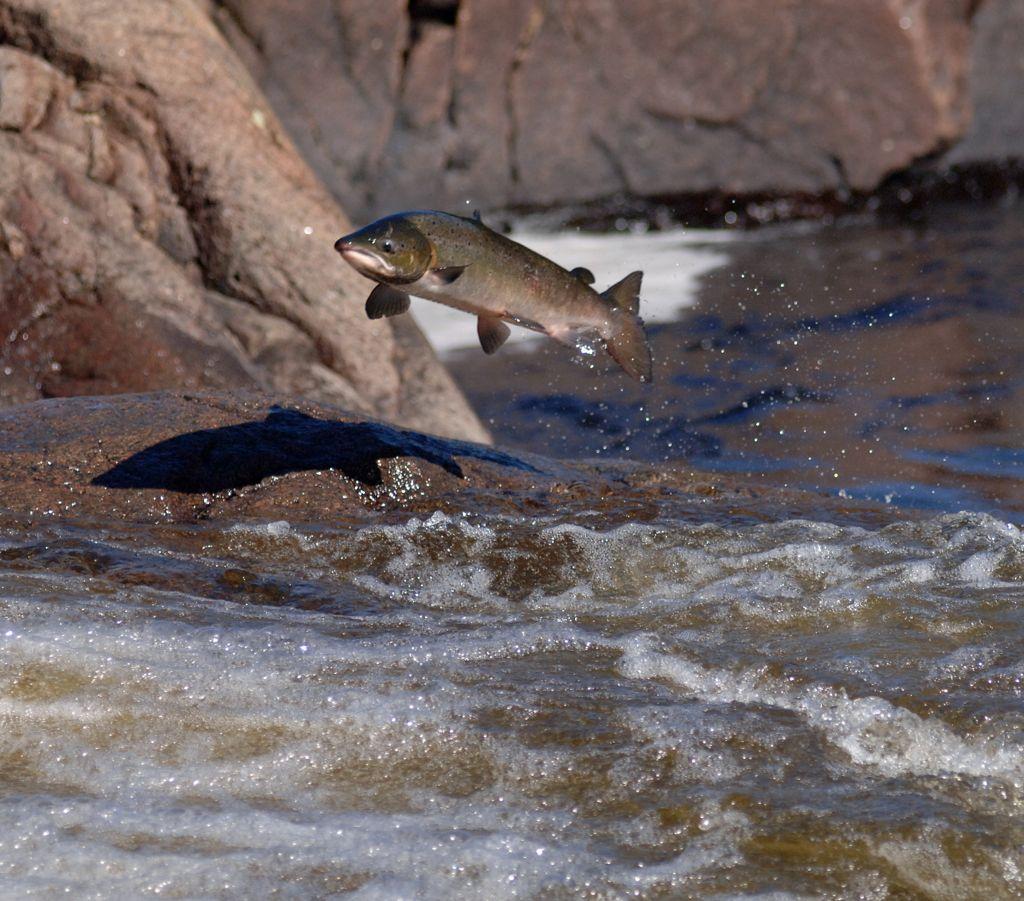 рыбалка на Кольском полуострове реке Харловка