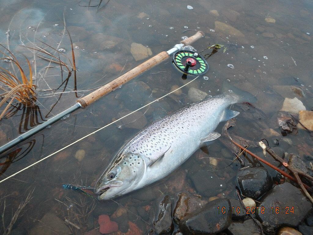 Рыбалка в Архангельской области. Ловля лосося, семги, хариуса, кумжи.