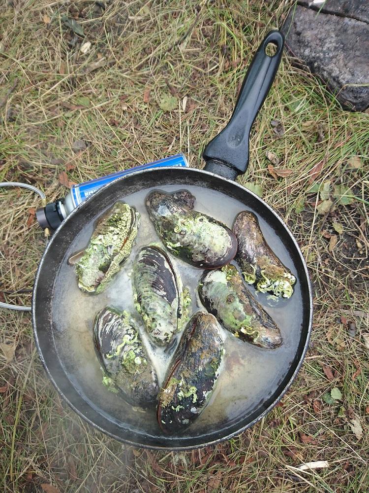 Рыбалка на Кольском полуострове, реке Ура, Титовка, Кола, Кица