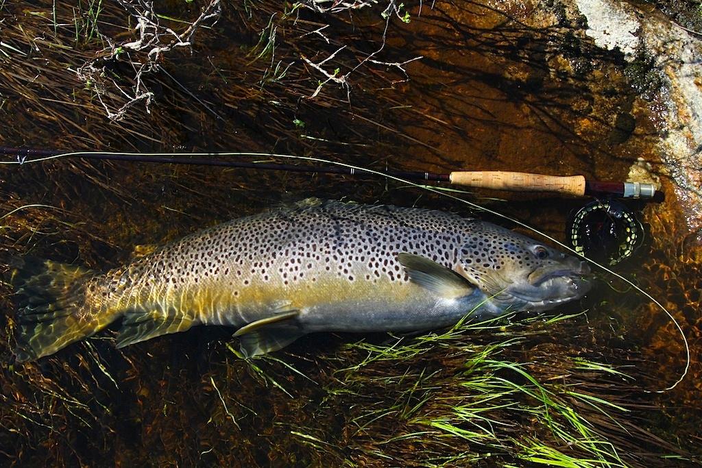 слой требуется фото рыб кольского полуострова аппетитами ингушских